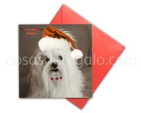 Felicitación de Navidad de perro Shih Tzu con piedrecitas y gorrito