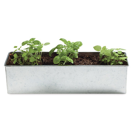 Kit Foodie Garden de horticultura de albahaca Basil-o-holic